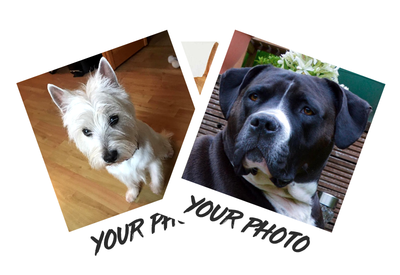 Personalised Using Your Photos